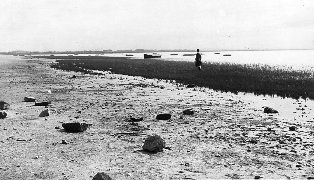 Mud & grass on Lytham Beach in the early 1950s.
