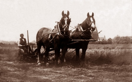 Ploughing at Warton in the early 1900s with the peg windmill in the distance.