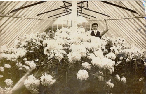 Greenhouses at Marton, Blackpool c1905.