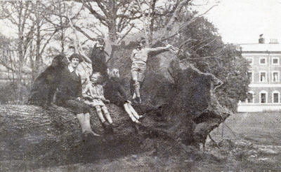 Cedar of Lebanon, Lytham Hall Park, 1930